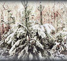 Winter Memory by DottieDees