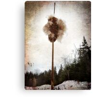 Cattail explosion Canvas Print