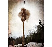 Cattail explosion Photographic Print