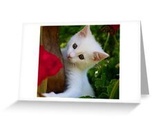 Kitten in Flower Pot Greeting Card