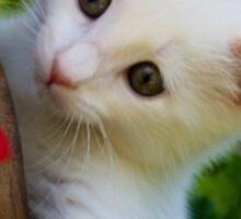 Kitten in Flower Pot Sticker