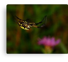Black and Yellow Garden Spider High Wire Act Canvas Print