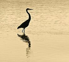 Silhouette of a Heron by Monte Morton