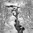 Snowy Stream by Joseph T. Meirose IV