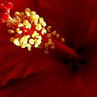 Stamen by Loree McComb