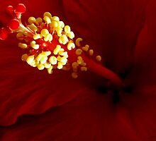 Stamen by © Loree McComb