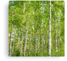 birch I Canvas Print