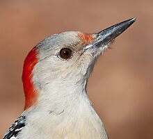 Red-Bellied Woodpecker by (Tallow) Dave  Van de Laar