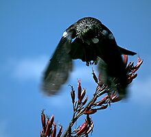 Close encounters of the bird kind ! by Roy  Massicks