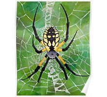 Marbled Orb Weaver - Ohio Poster