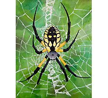 Marbled Orb Weaver - Ohio Photographic Print