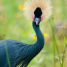 """""""Fancy Feathers"""" - an african crowned crane by ArtThatSmiles"""