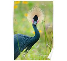 """""""Fancy Feathers"""" - an african crowned crane Poster"""
