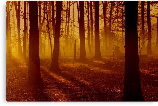 Blazon Embers by NatureGreeting Cards ©ccwri