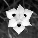Iris in Black and White by Michael John