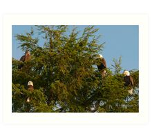 Four Bald Eagles Art Print