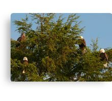 Four Bald Eagles Canvas Print