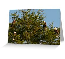 Four Bald Eagles Greeting Card