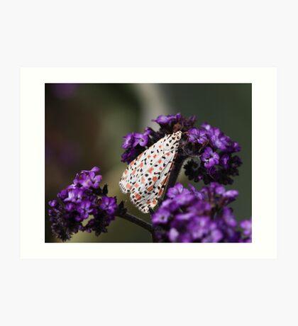 Crimson-speckled moth Art Print