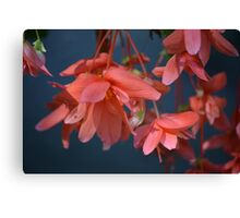 Trailing Begonia in red Canvas Print