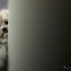 Please Let Me In? by Annie Lemay  Photography