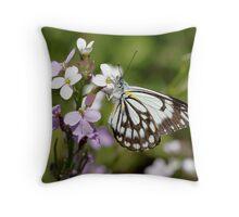 ~ Butterfly ~ Throw Pillow