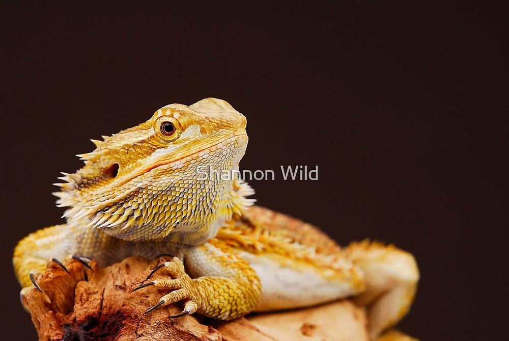 Central Bearded Dragon (Pogona vitticeps) by Shannon Benson
