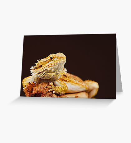 Central Bearded Dragon (Pogona vitticeps) Greeting Card