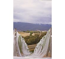 vineyard netting Photographic Print