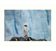 Adelie Penguin Art Print