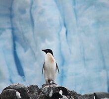 Adelie Penguin by KeithTayler