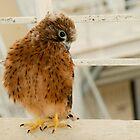 I'm now shy but whatch out! by DeoVolente (Dewahl Visser)