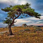 Finding Peace, Dog Rocks by Danka Dear