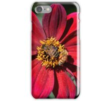 Two Bees on Red Dahlia Flower iPhone Case/Skin