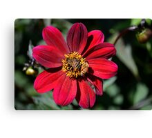 Two Bees on Red Dahlia Flower Canvas Print
