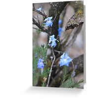 Lechenaultia in Serpentine Greeting Card
