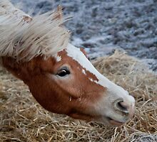 Horse with no name by fabioberetta
