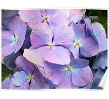 Pretty in Purple Poster
