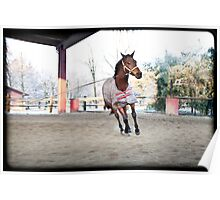 horse training Poster