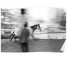 Horse panning Poster