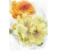 Soft Poppies Photographic Print