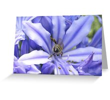 Agapanthus and bee Greeting Card