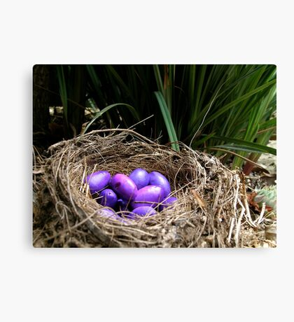 Dianella Eggs Canvas Print