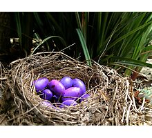 Dianella Eggs Photographic Print