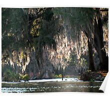 Sun and Spanish Moss Poster