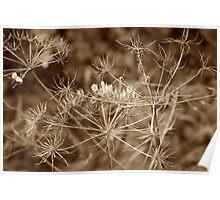 Bare Autumn Elderflower Poster