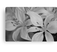 Black And White Lillies Canvas Print