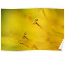 Macro Flower - Blütenstaub Poster