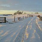 A winter's journey.... by froglet
