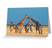 Giraffes' gathering Greeting Card